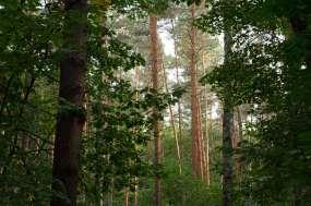 Trees - 0005 - Berlin