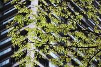 20100427_054714-IMG_7230_ji copy