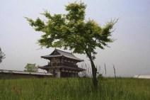 20100505_041100-IMG_8847_ji copy