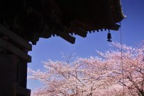20110405_031807-IMG_2836_ji