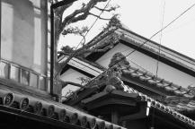 20110419_105108-IMG_7012_ji