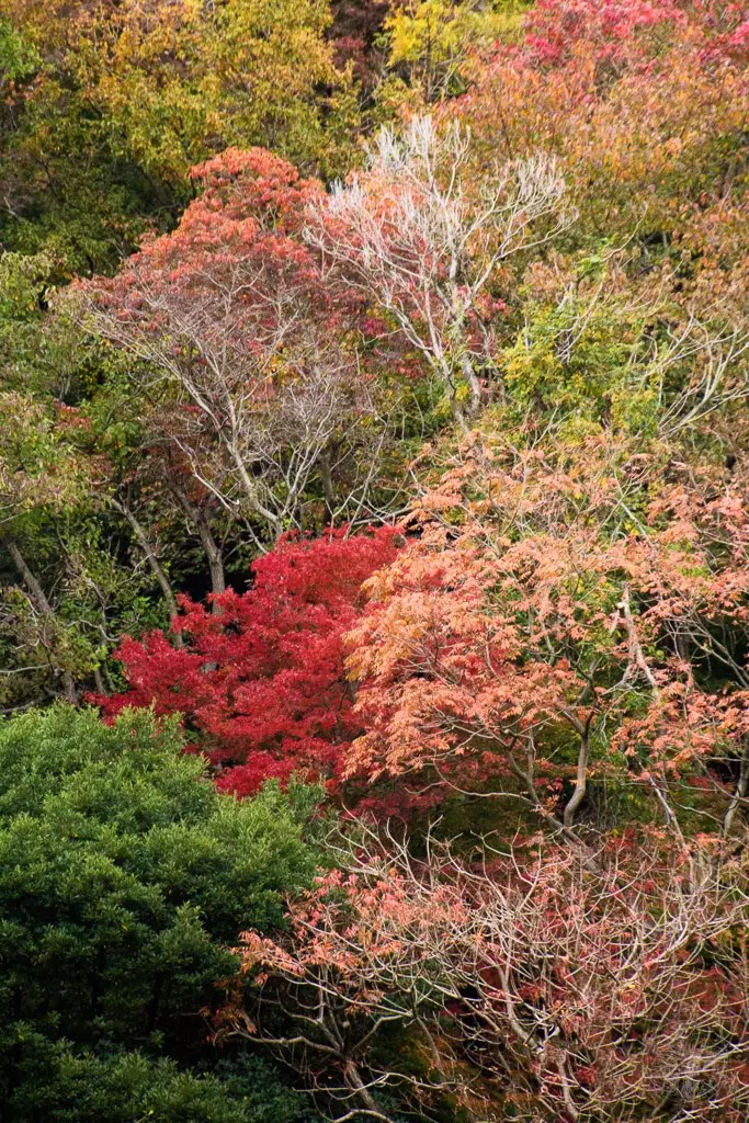 Japan - Kobe - Autumn Colours