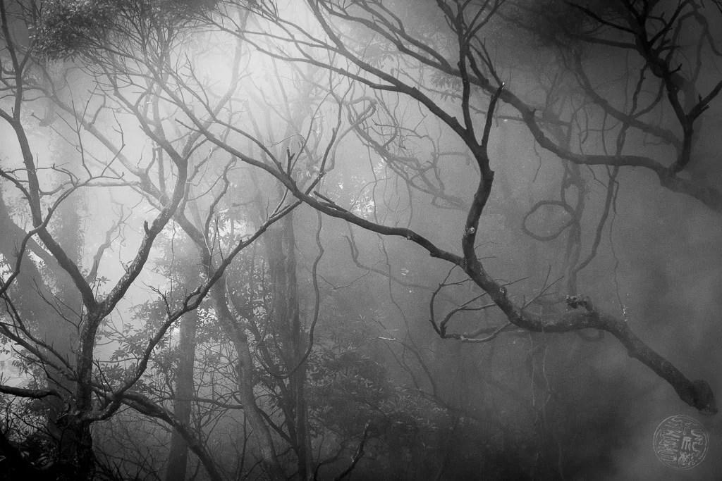 Japan - Oita - Beppu - Steamy Forest
