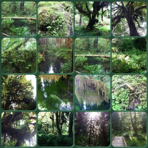 Here's a collage of all the greenery in the Olympic National Forest.