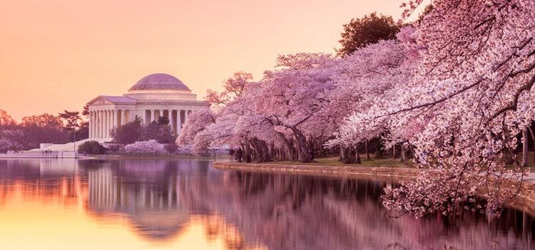 Cherry_Blossom_Festival_Washington