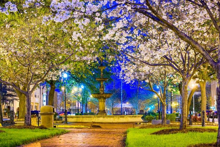 Cherry_Blossoms_Macon