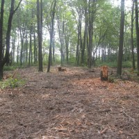 Fecon Bullhog Wood Clearing