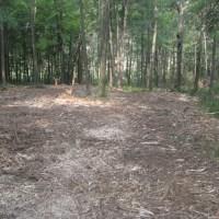 Fecon Bullhog Wood Clearing