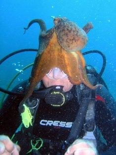 Leren-duiken-op-Kreta