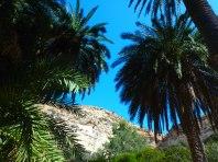 Zomer excursies op Kreta (5)