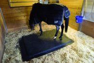 box pour chevaux produits