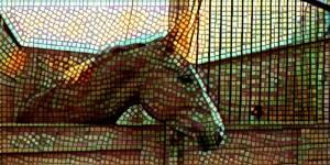 10. Horse sense