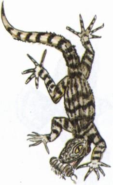 Крымский геккон