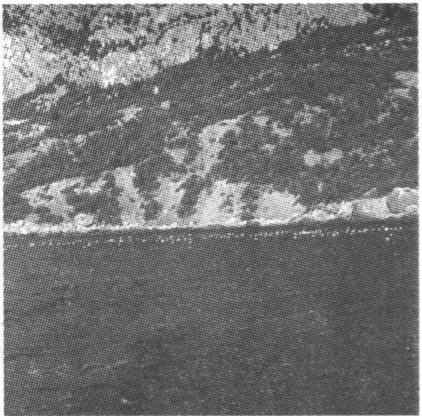 Вид с моря на мидийную ферму