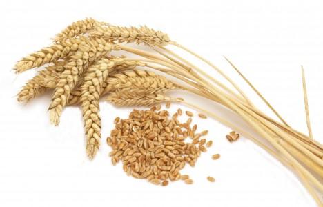 Wheat-genhu-krishi sahayak