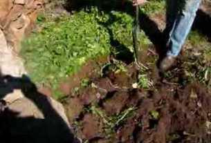 हरी खाद-खेत का प्राकृतिक टॉनिक