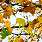 How to Plan for the Fall Flurry