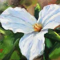 white trillium daily oil painting by Krista Hasson