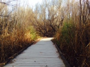 One of the many boardwalks throughout the preserve