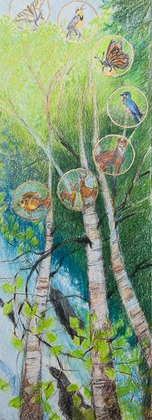 Pencil Sketch Birch Forest