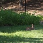 Plot Bunnies: Proper Care and Feeding