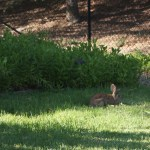 Proper Care and Feeding of Plot Bunnies