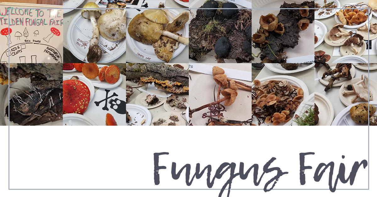 You are currently viewing The Fungus Fair