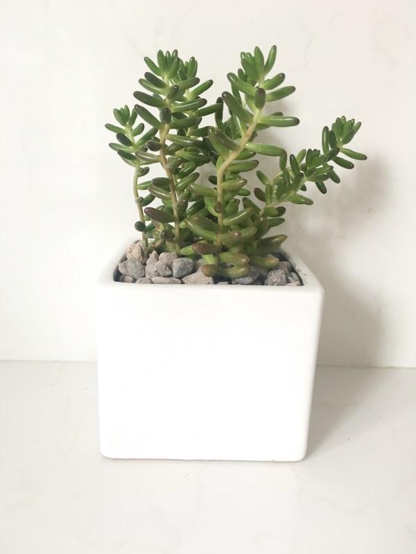 white square ceramic planter