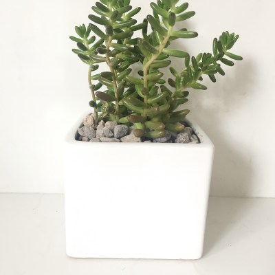 white square ceramic planter