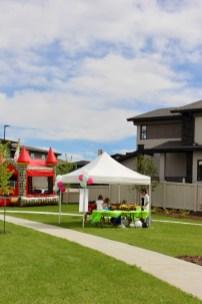 community-event-salisbury-in-bloom-15