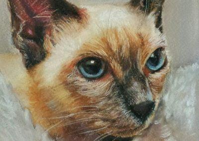 Siamese cat – pastel on paper