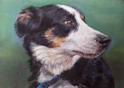 Collie – pastel on paper
