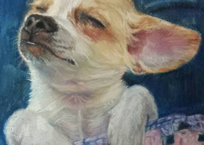 Lola – pastel on paper