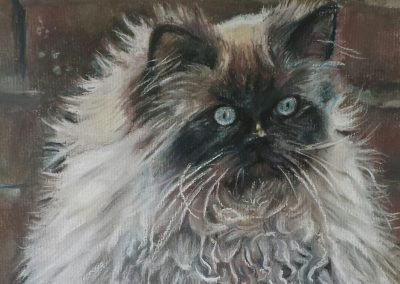 Tinks – pastel on paper