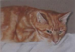 Ginger Tom – pastel on paper