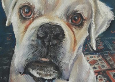 Gus – pastel on paper