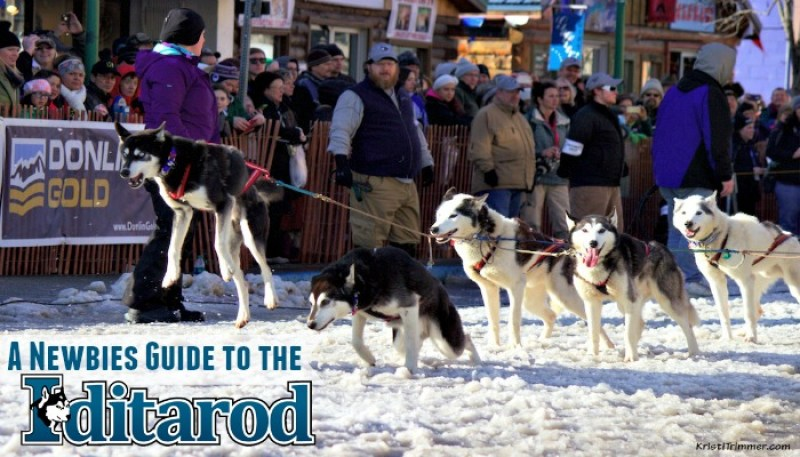 Newbies Guide to the Iditarod