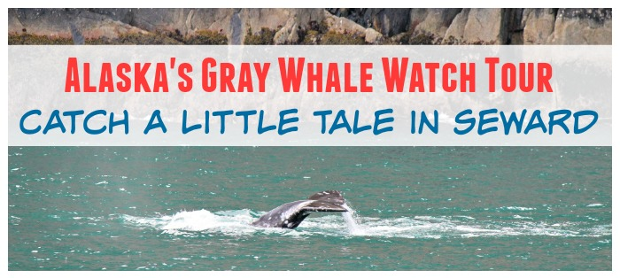 Alaska's Gray Whale Watch Tour feature