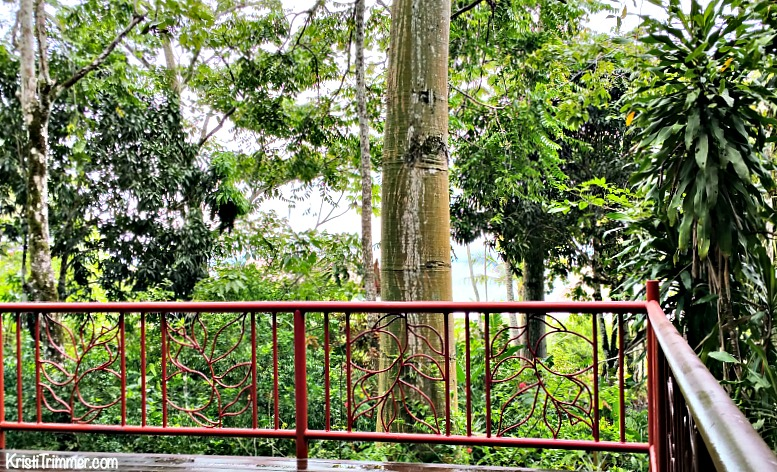 Iguana Lodge_Balcony View