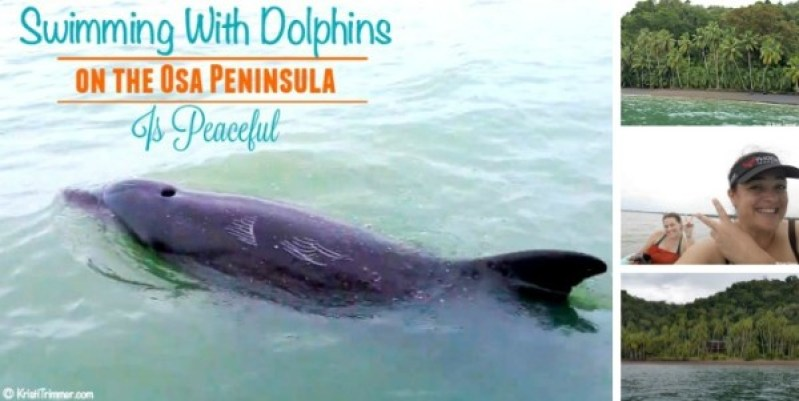 Swimming WIth Dolphins on Osa Peninsula is Peaceful feature 2