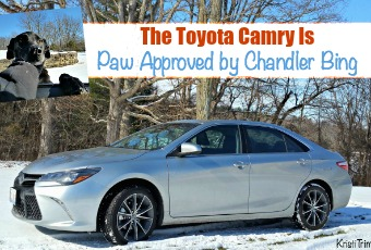 The Toyota Camry Is Paw Approved by Chandler Bing