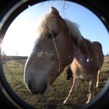 Pferd_Fisheye4