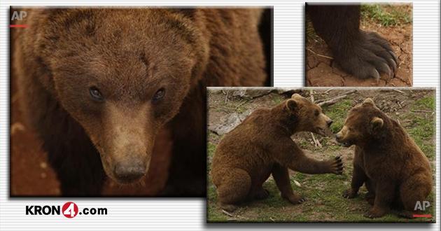bears_145683