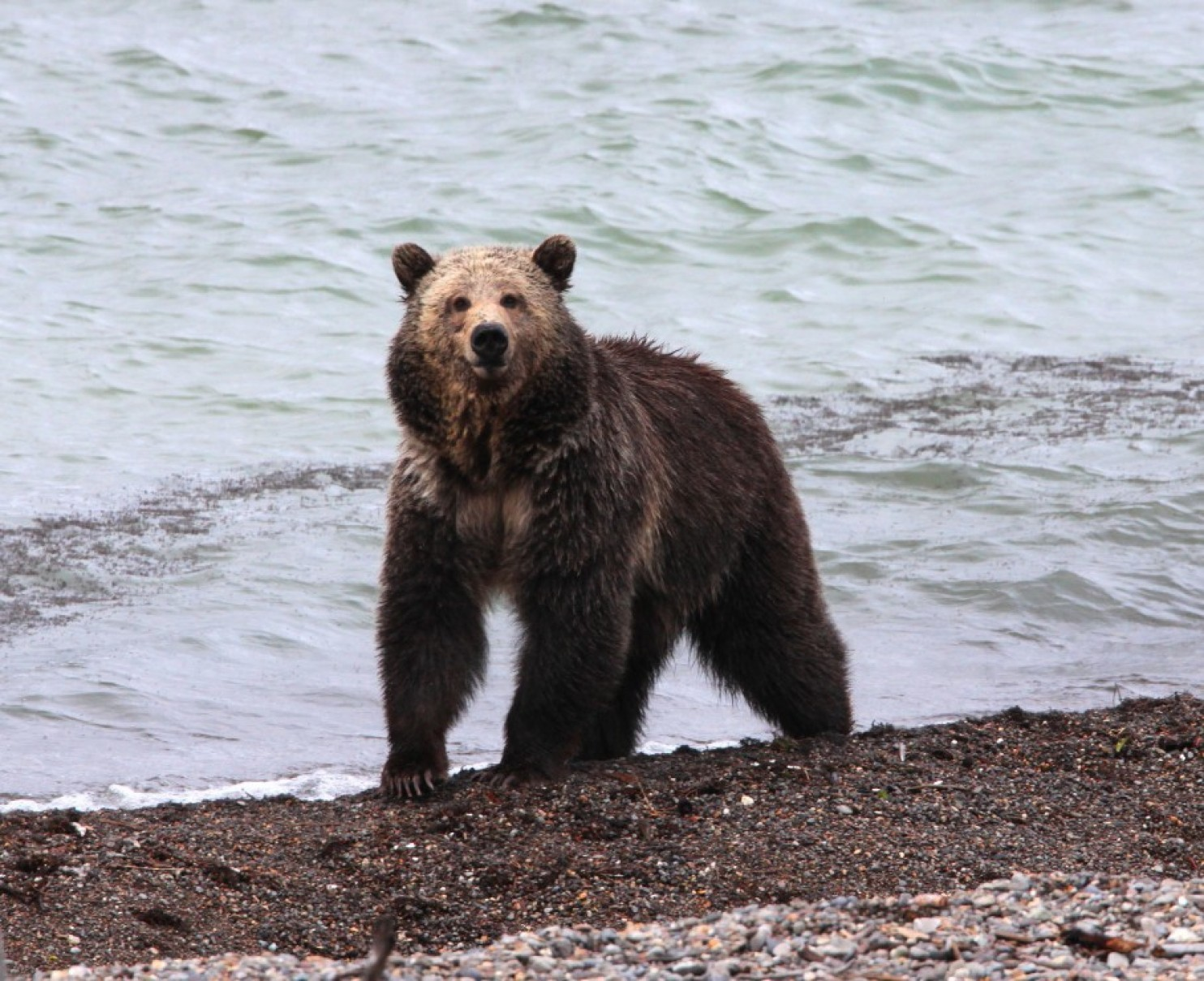 grizzly bear file_211205