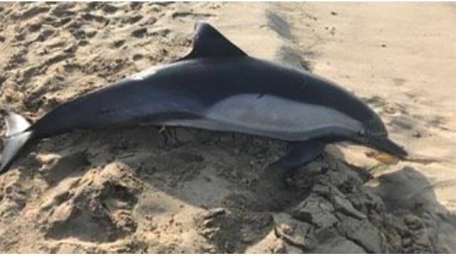 dolphin shot to death_1542485755683.jpg_62450165_ver1.0_640_360_1542492336957.jpg.jpg