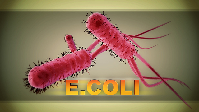 Image result for ecoli