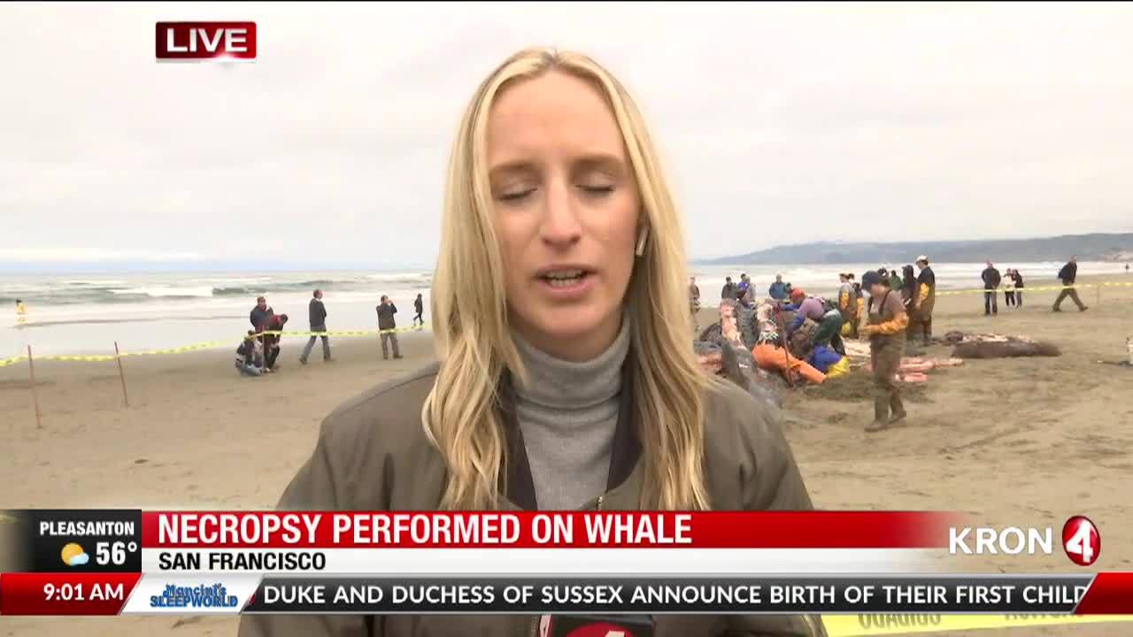 Necropsy_performed_on_whale_in_Bay_Area_8_20190507162222