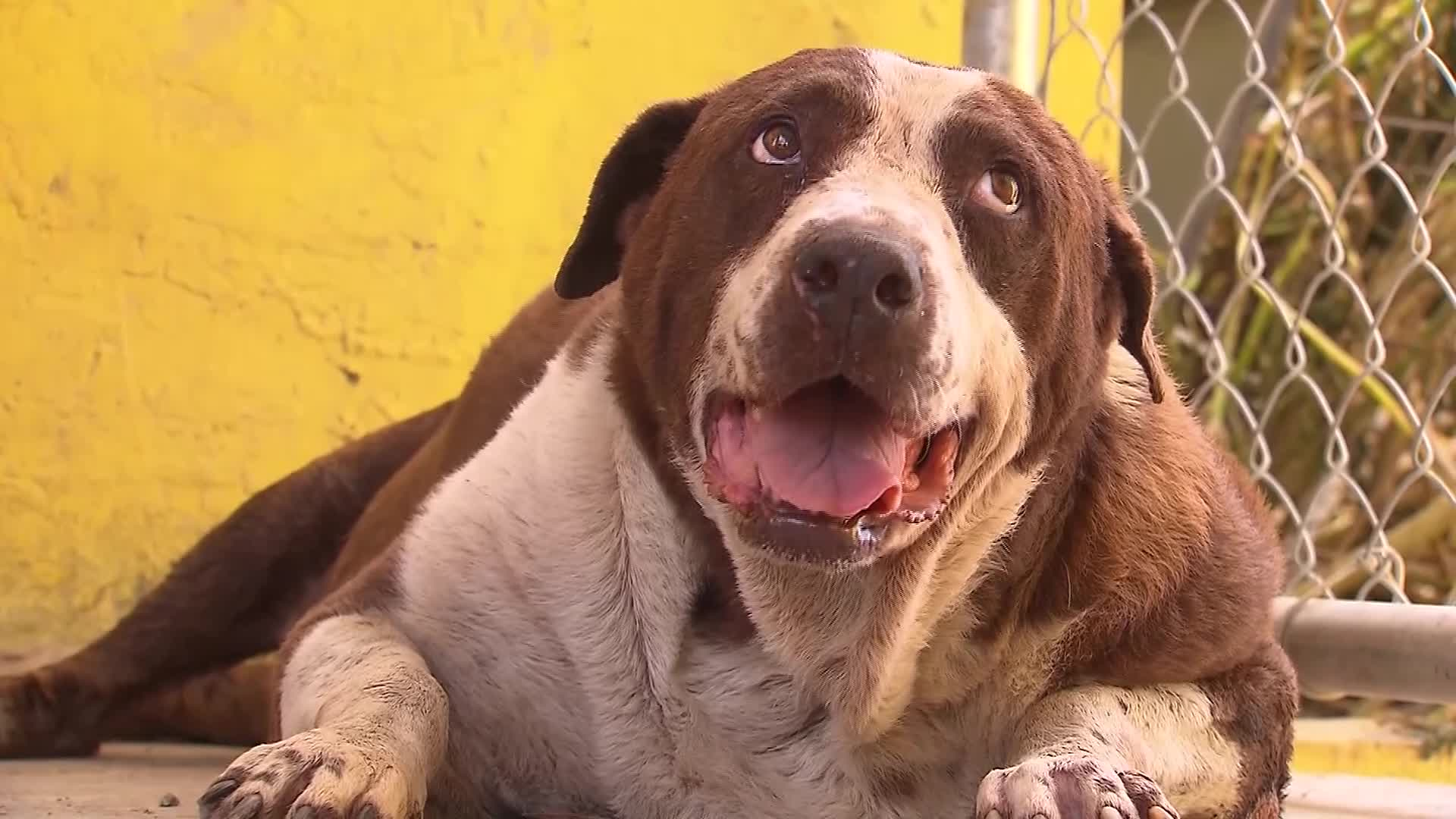 More than 200 dogs, 50 cats killed after Hurricane Dorian