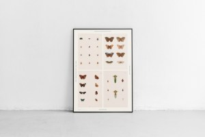 poster-insectes