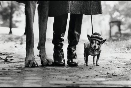 Elliott Erwitt: over dat wij eigenlijk honden (willen) zijn